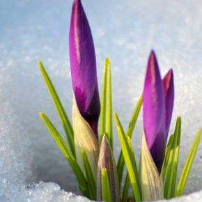Нумерологический прогноз для рожденных 5-го марта