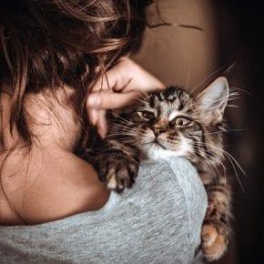 Пустая квартира, коты и холодная постель: к чему приводит женское одиночество