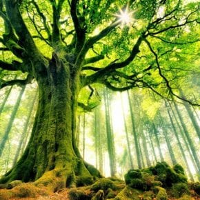 14 растений, обладающих магическими свойствами