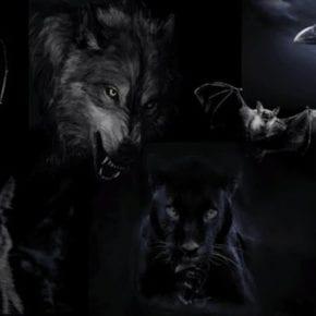 Выберите одно из 7 животных, и мы раскроем самые темные аспекты вашей личности
